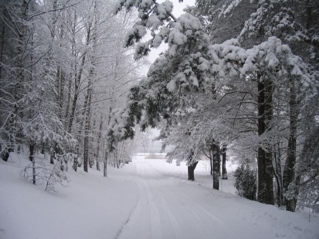 Zbrzyca zimą